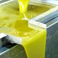 olio-extravergine-frantoio