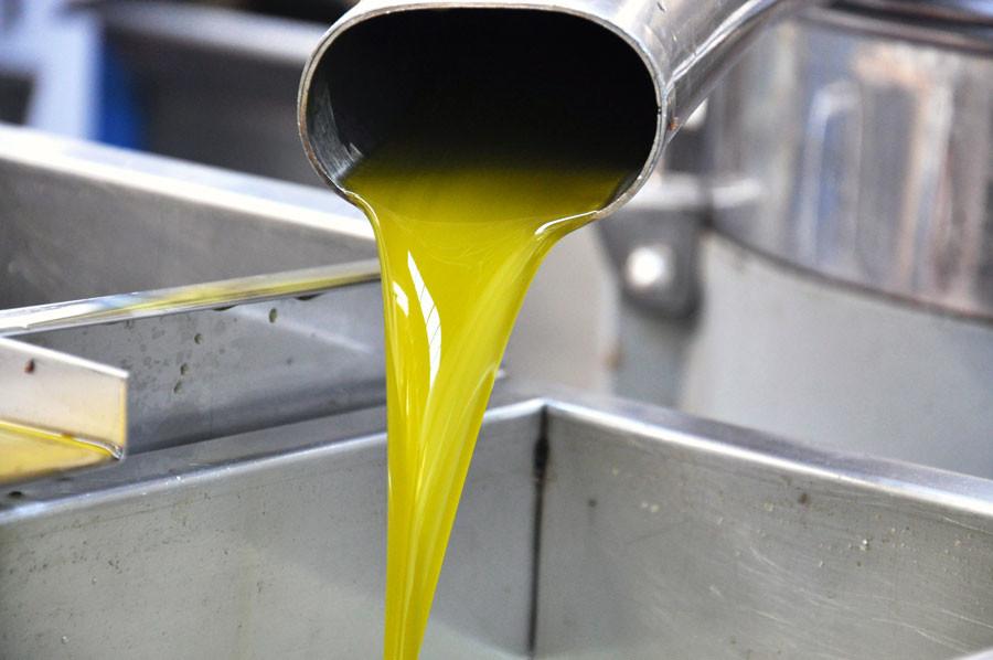 Differenza tra olio vergine ed extravergine