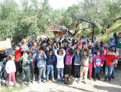 """Percorso didattico """"Dall'oliva all'olio"""" in Azienda Manfredi"""